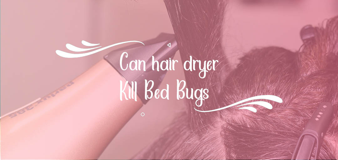 Can Hair Dryer Kill Bed Bugs